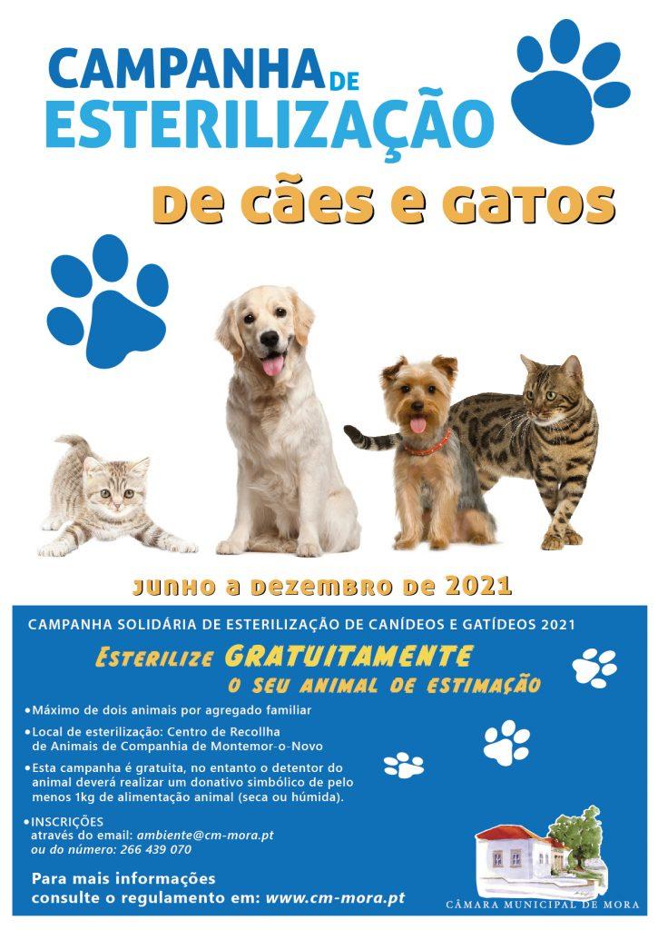 Câmara Municipal de Mora promove campanha solidária de esterilização de animais de companhia