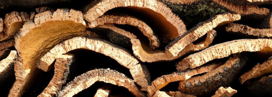 Hasta Pública – Alienação de Cortiça na Árvore