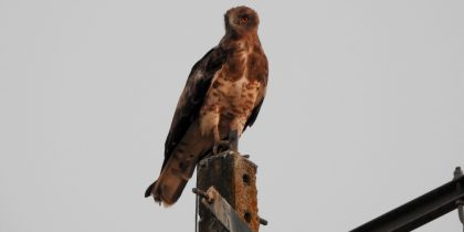 """Exposição de fotografia """"Aves do Sítio de Cabeção (rede natura 2000)"""""""