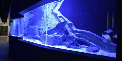No Fluviário de Mora nasce um novo espaço de exposição viva