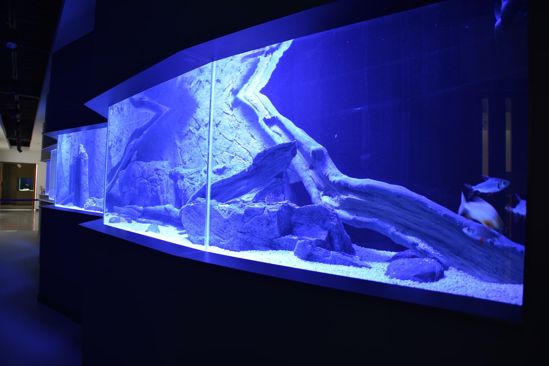 Fluviário de Mora inaugura novo aquário